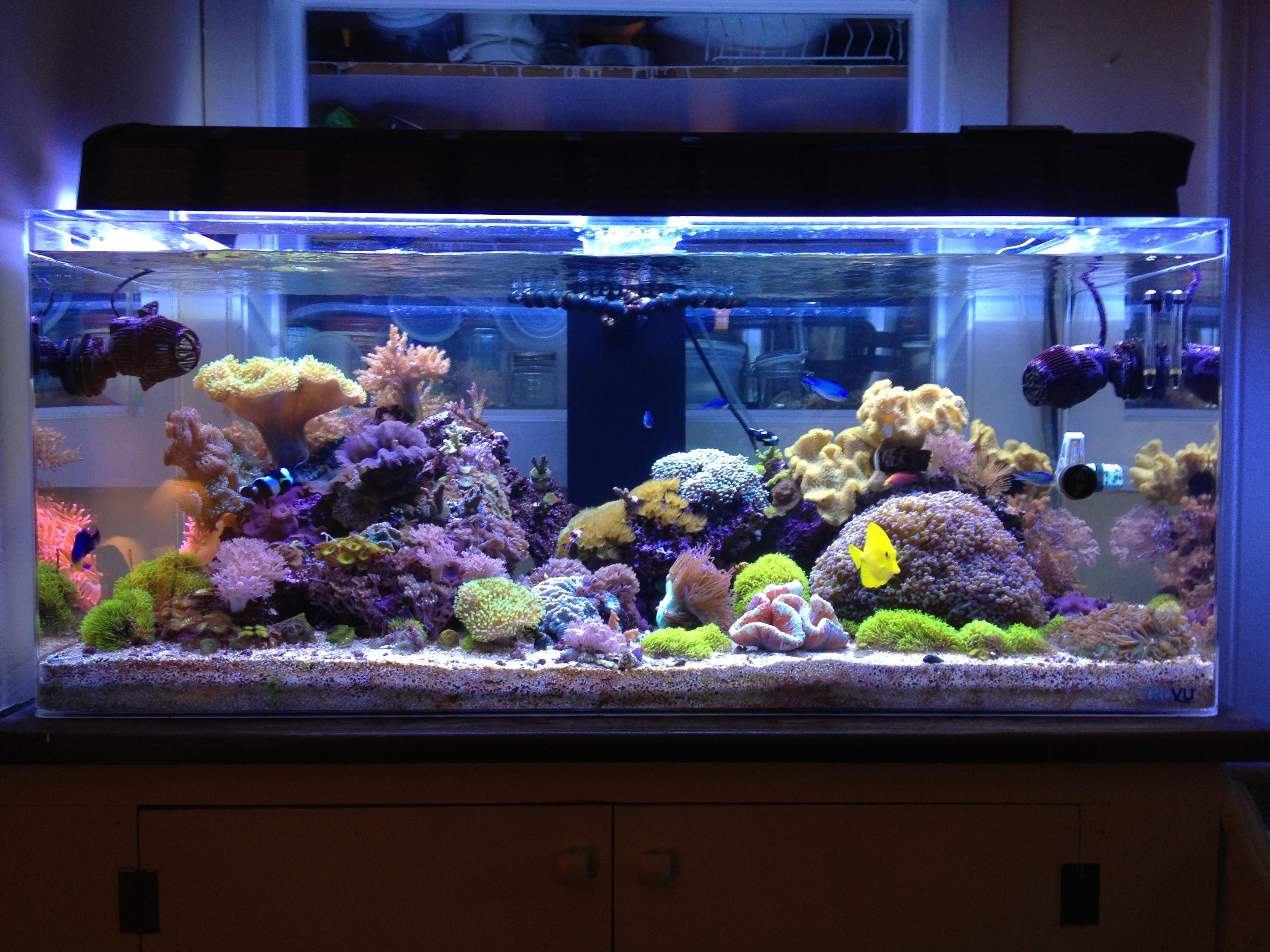 Reef joel barcelona 39 s blog for Reef fish tank